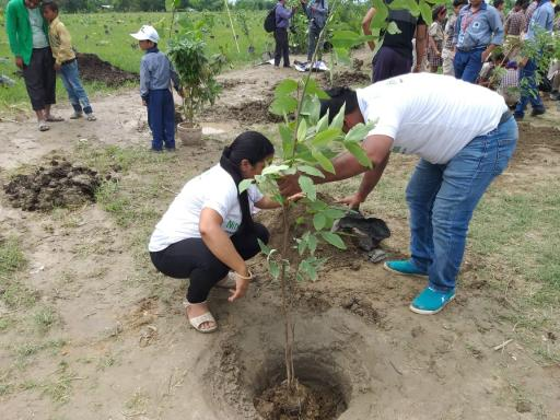 Donate for plantation in Delhi NCR India